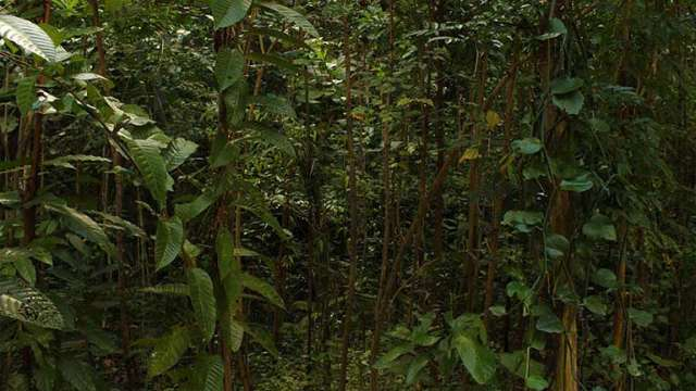 Amazing growth backyard mini forest