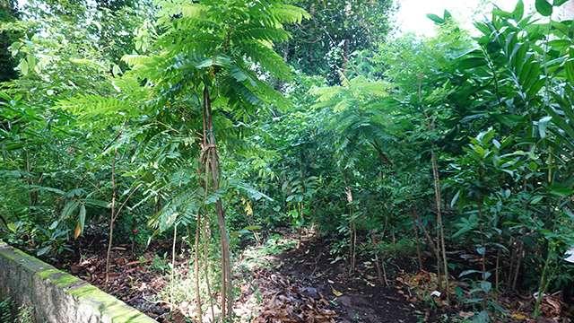 Forest near a Sacred Grove