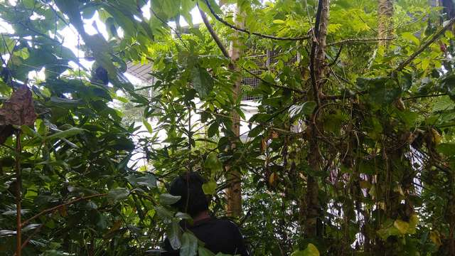 Fruit forest after an year