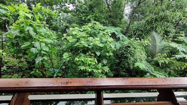 Fruit Vegetable Forest Near House