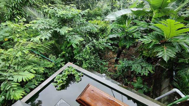 Fruit Vegetable Forest Top View