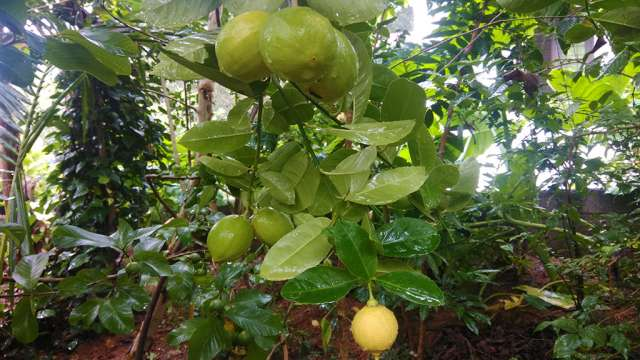 Fruits in Fruit Forest