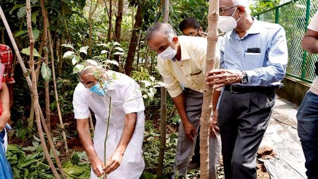 Minister A K Saseendran plants a camphor tree, Present- Prof V.K Damaodaran and Mr. Cherian Mathew