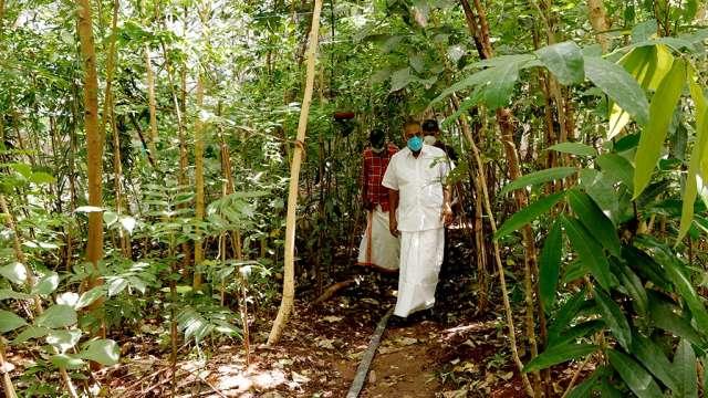 Minister A K Saseendran visiting miyawaki forest at the school