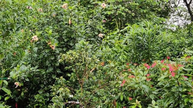 Miyawaki Flower Forest