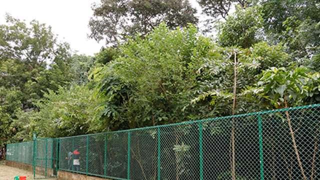 Miyawaki Forest at GHSS, Chalai