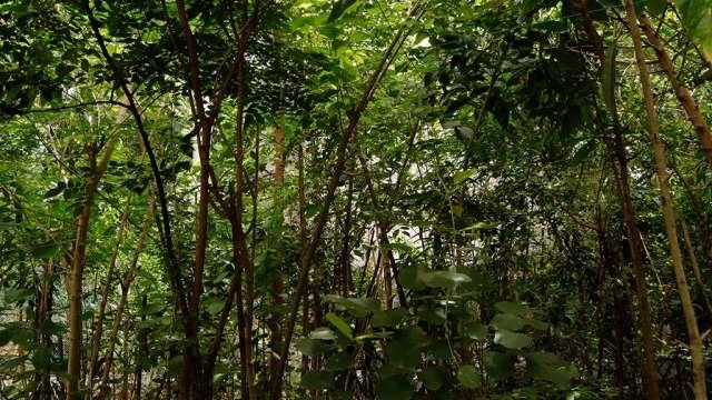 Miyawaki Model Urbal forest at  Government school, Chalai in Thiruvananthapuram