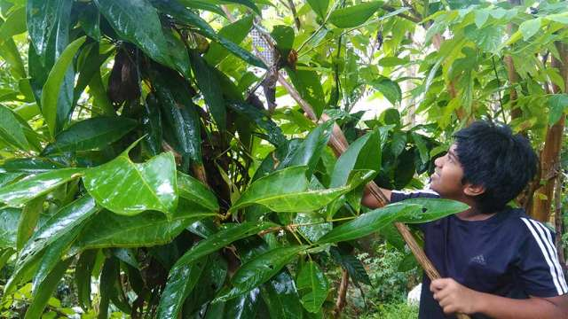 Pranav nurturing the plants