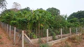 Miyawaki Forest at CUSAT, Thirkkakkara, Kochi