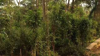 Miyawaki Forest at Shanthanpara, Munnar