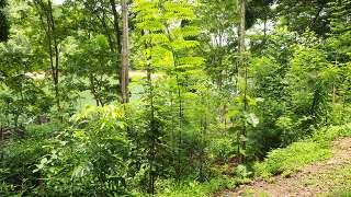 Miyawaki Forest at Neyyar Wildlife Sanctuary