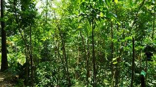 Miyawaki Forest at Suvarnodayam Biological Park