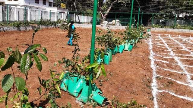 Plantation in progress
