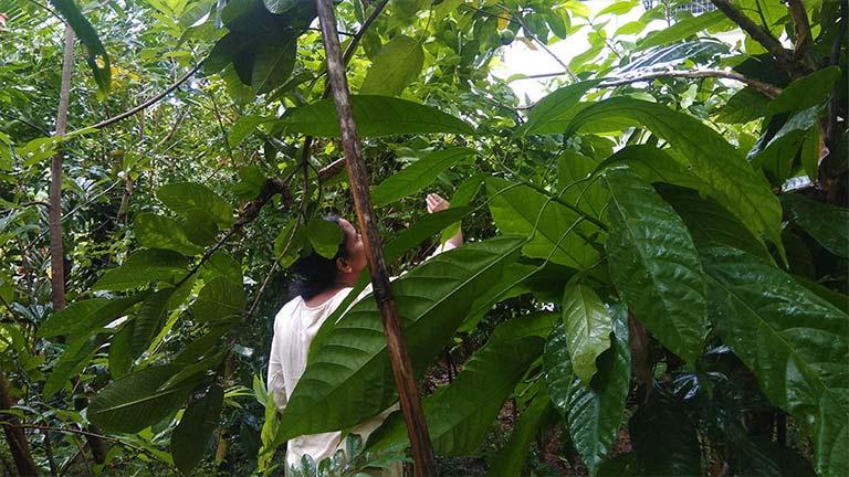 miyawaki fruit forest in one year